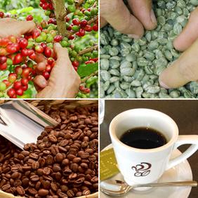 ▲実っている赤いコーヒー、発酵させて果肉を外した生豆、焙煎後の茶色い豆、抽出した黒い液体。どれもすべて「コーヒー」