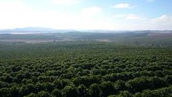 ▲平地にある一般的なブラジルの農園