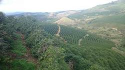▲山岳地帯にあるイパネマ農園リオ・ベルデエリア
