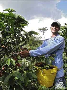 コロンビアは、他国に先駆け、また全国一丸となって環境保護や持続可能なコーヒー生産に取り組んできた